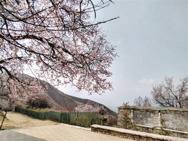 拉萨帕崩岗、达东村、宗角禄康公园都私藏了拉萨最美好的春天
