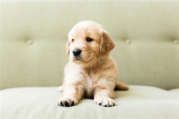 中通再现宠物盲盒已立案观测被罚3万元  ZTO快递宠物盲盒