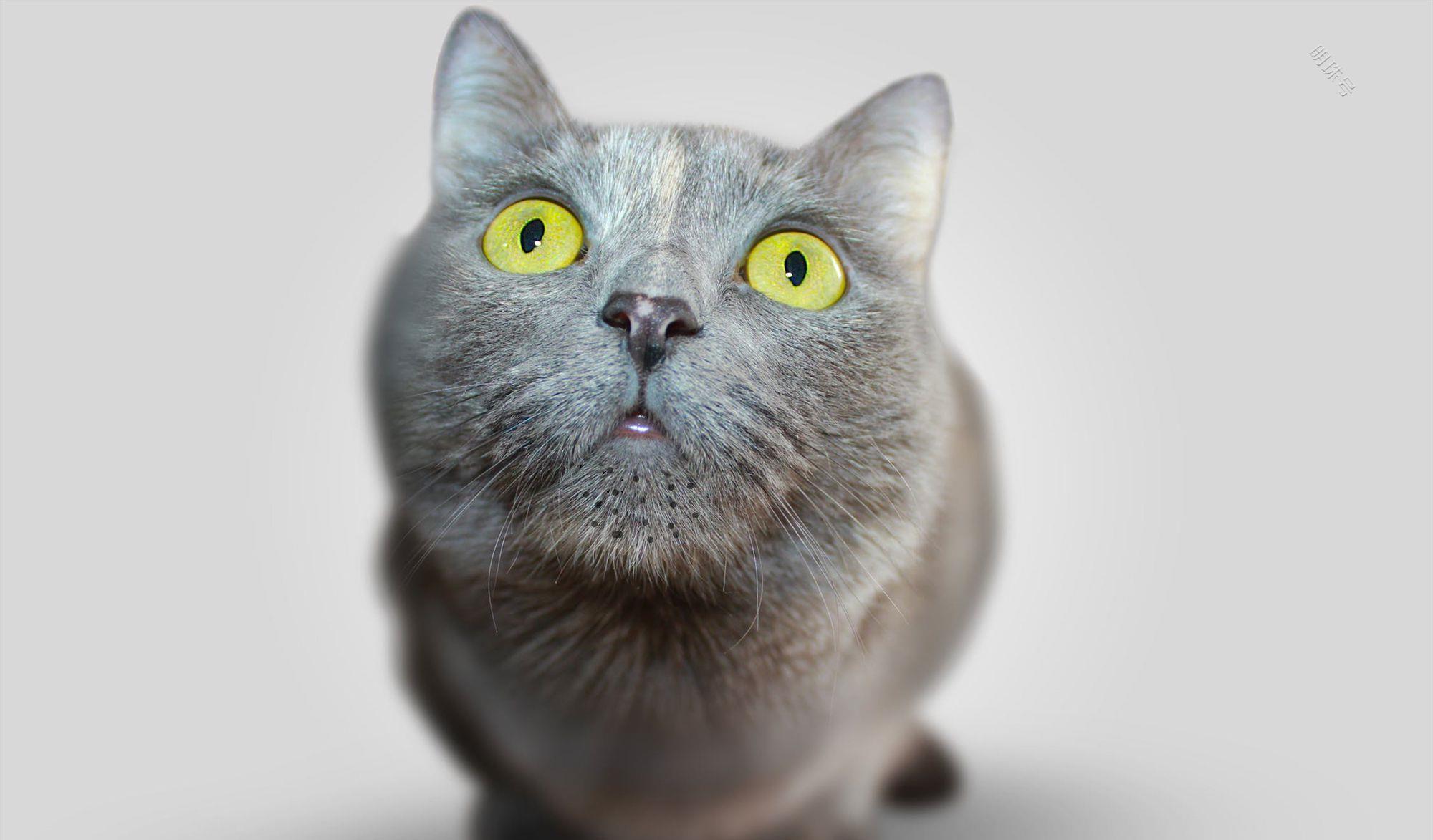 辟谣:猫咪黑下巴是因为猫粮太油?没有必然关系,主要是6个原因