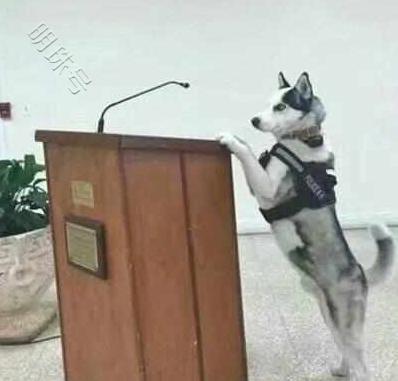 二哈凭本事当上警犬,上任第一天就仗势欺人!论吵架没