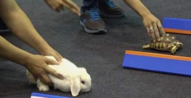 """现实版的""""龟兔赛跑"""",乌龟用实力证明了,兔子当年输得不冤枉!"""