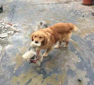 """""""狗狗受到伤害后,饲主做出这样的行为"""