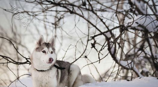 有哪些狗狗很有个性,不听话?