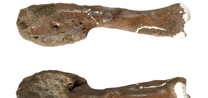 古生物学家首次在恐龙化石中发现了癌症