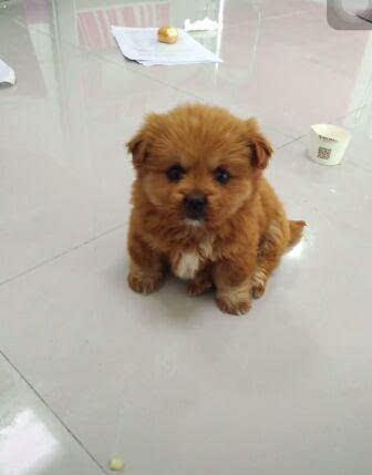 小家伙长大后居然变色了,网友:怕是养了一只假狗吧!