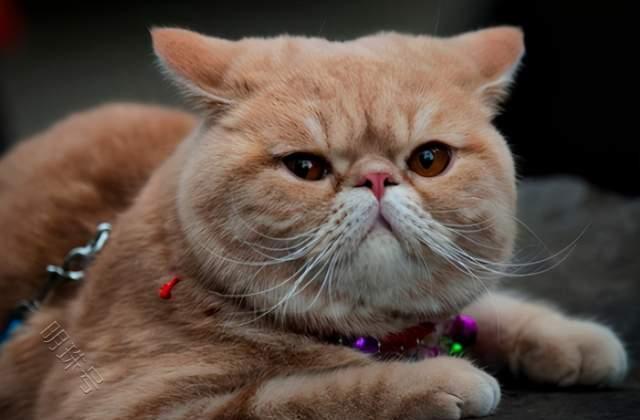 """""""加菲猫有泪痕怎么办"""