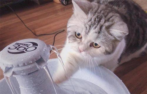 养宠经验:猫咪尿不出来怎么办