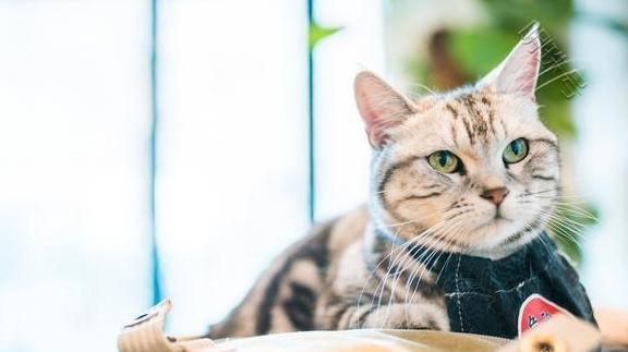 为什么现在养猫的人越来越多?其实是因为这10大福利