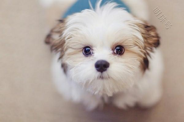 家里养这几种狗狗,会让你的狗狗变得更聪明