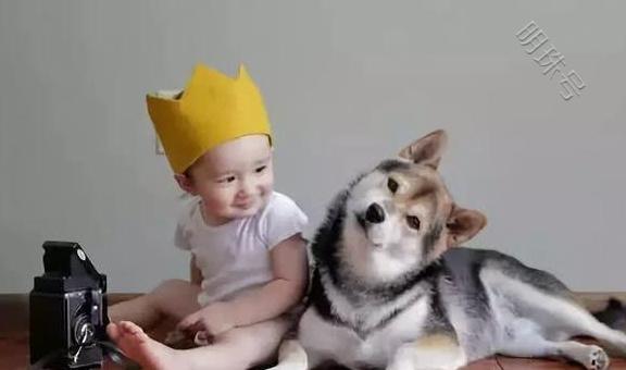 柴犬自告奋勇来看顾着宝宝了,还一直用爪子给宝宝摇篮