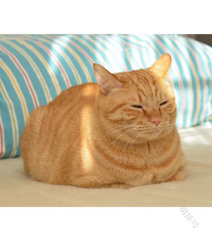 猫舍/原生家庭环境准备养猫的必须做好四点