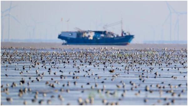 非法捕猎野鸭80只售卖,被警方采取刑事强制措施