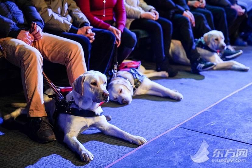 """导盲犬的故事:""""云养家长""""们听后煽然泪下 它们的工作环境正在变好"""