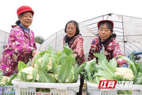 蔬菜上新了 请查收!