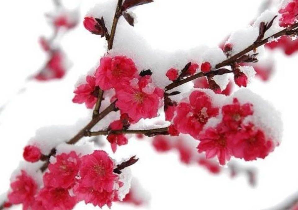春雨+春雪+雨夹雪组团来济!强冷空气来袭局地降温超