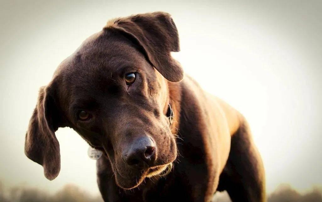 孤独老人去世后狗狗每天就干一件事