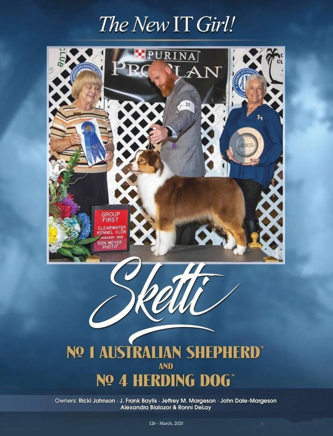 2020年度美国AKC澳大利亚牧羊犬排行榜TOP10