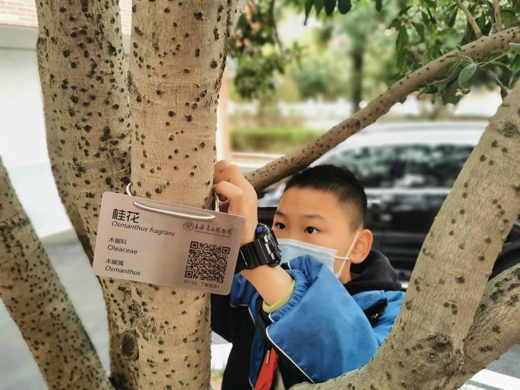 """看着熟悉却叫不出名字?辰山植物园""""校园植物课堂""""教你认识植物"""