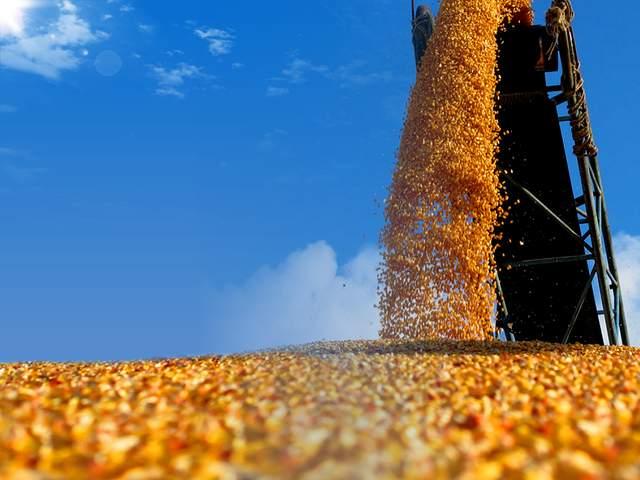 山东:将确保年收购粮食三千二百万吨以上