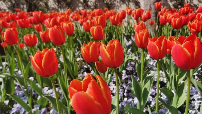 最佳赏花期将至,全国春日热门赏花地一网打尽
