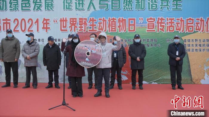 30年守护:世界濒危鸟类黑嘴鸥在辽宁从千至万