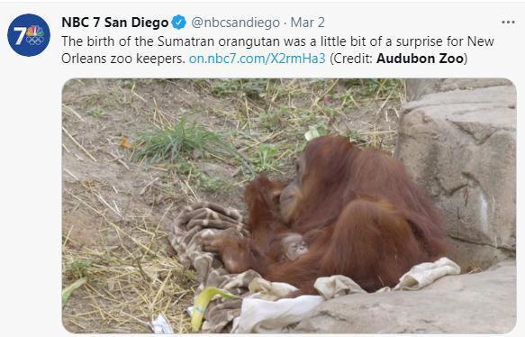 两年内第2只!美动物园喜迎濒危红毛猩猩宝宝(图)