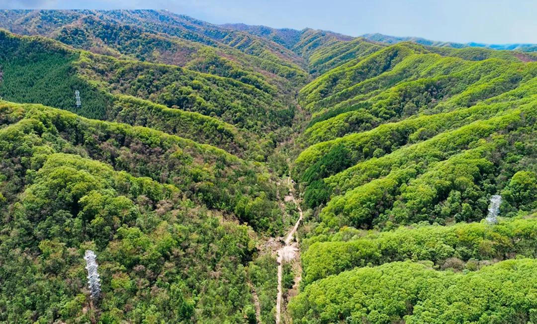温带次生林生态系统塔群监测研究平台丨中国科学院野外站重点科技基础设施