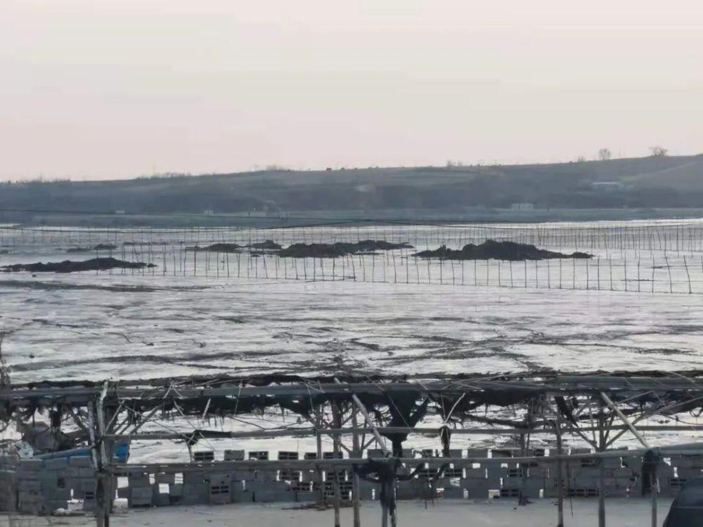 大连6000亩海域使用权不明:渔民海货被抢渔船被砸 交钱才能出海