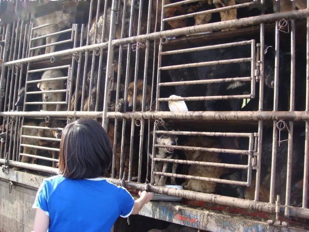 那一天,让一生改变 4.15京哈高速救狗,十年了。