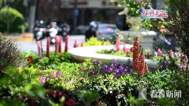 视频|花开上海:见缝插绿 处处是春