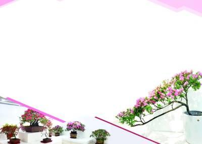 """""""花中西施""""渐入最佳观赏期 上海植物园、辰山植物园都可以观赏"""
