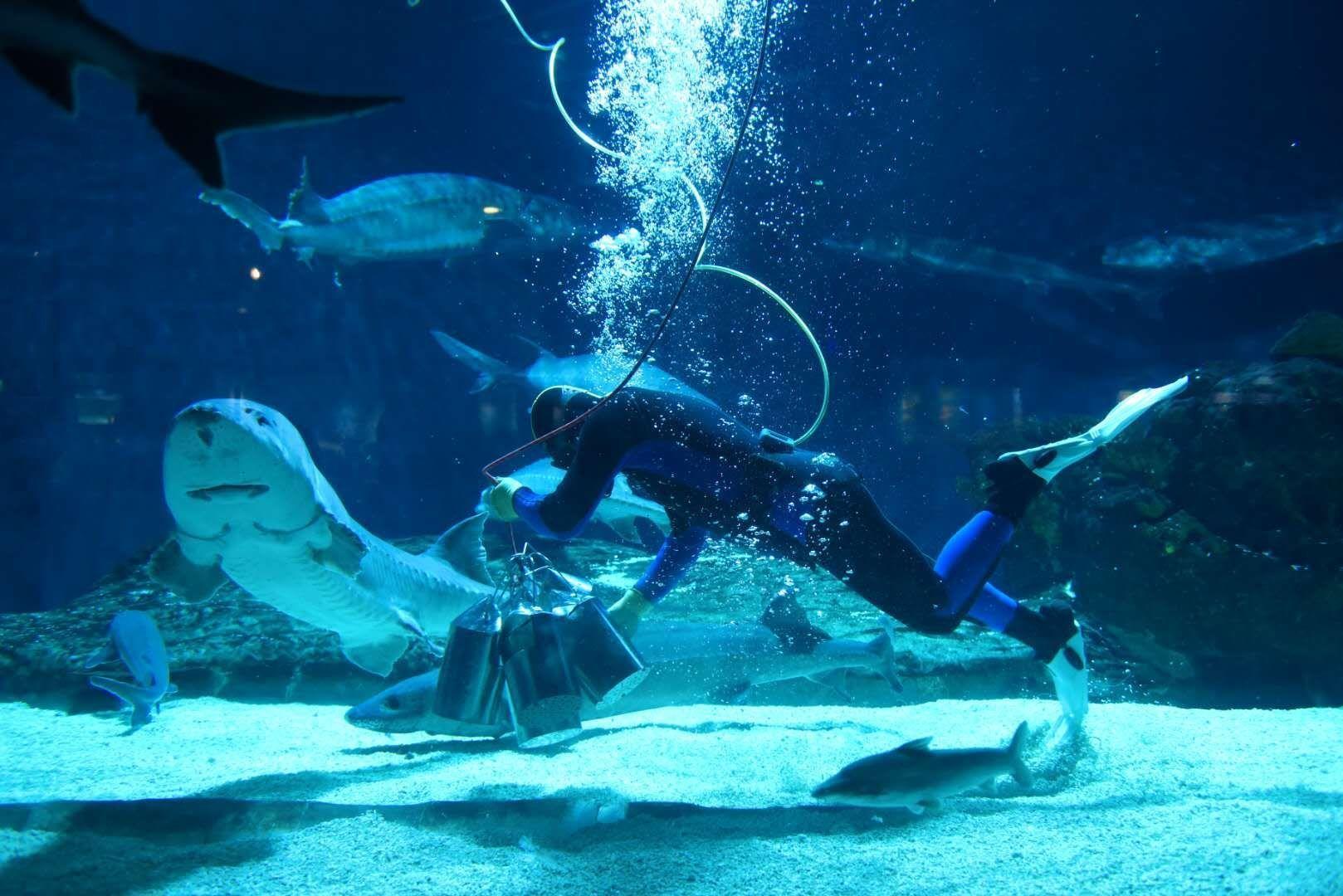 """""""海洋吃货养成记""""第二季北京海洋馆再度开启海洋生物喂食科普展示"""
