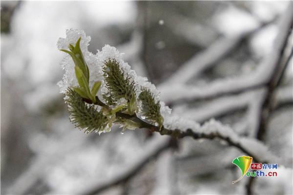 俄罗斯气温骤降 郊区被大雪覆盖
