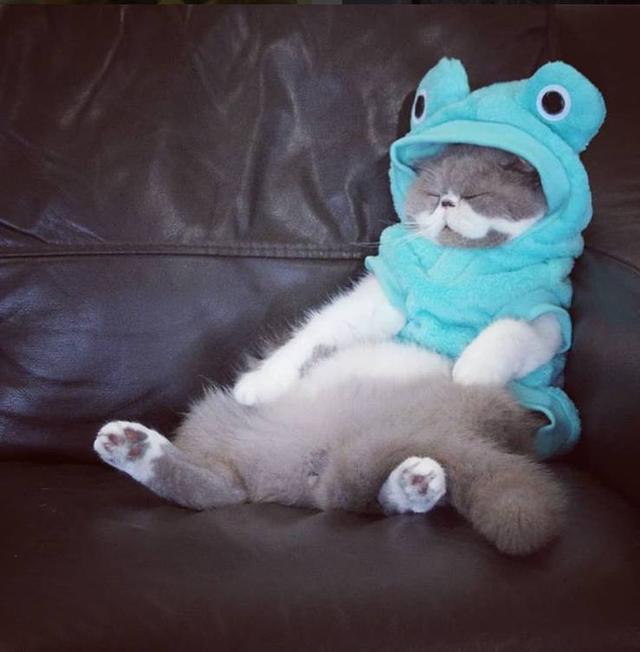 蓝猫和加菲猫争宠被训,担心它想不开,偷偷跟踪后没忍