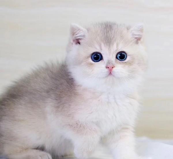 猫猫刚到家很害怕,主人该怎么办?