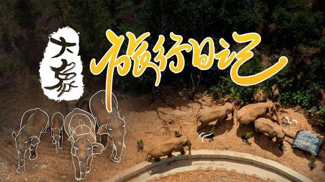 大象旅行日记③ 单飞的象哥,他威武雄壮