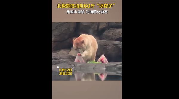 北极熊吃上特制60斤冰粽 最爱水果馅:吃相萌化游客