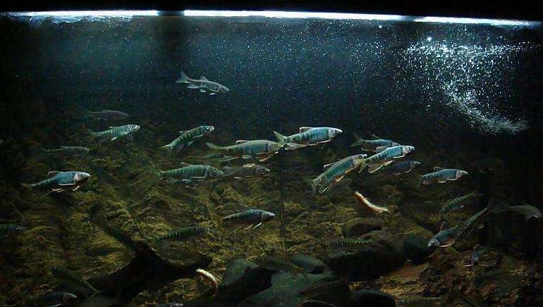 新手养观赏鱼前需要做哪些准备,鱼缸过滤需要怎么选