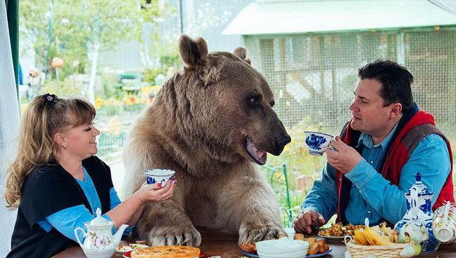 一对俄罗斯夫妇帮助收养一只孤熊。这是23年后的生活