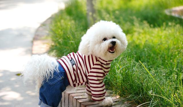 狗狗为什么会吃臭臭,牛粪为什么能钓鱼,动物不怕臭的原因找到了