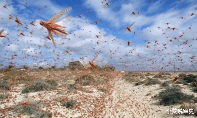 去年印度的4000亿蝗虫,为何一夜消失,怎么做到的?这个