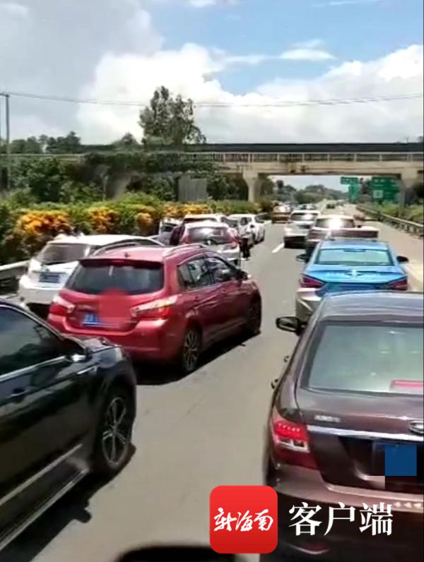 """椰视频   牛群高速路上""""散步"""",多车避让不及引发追尾事故"""