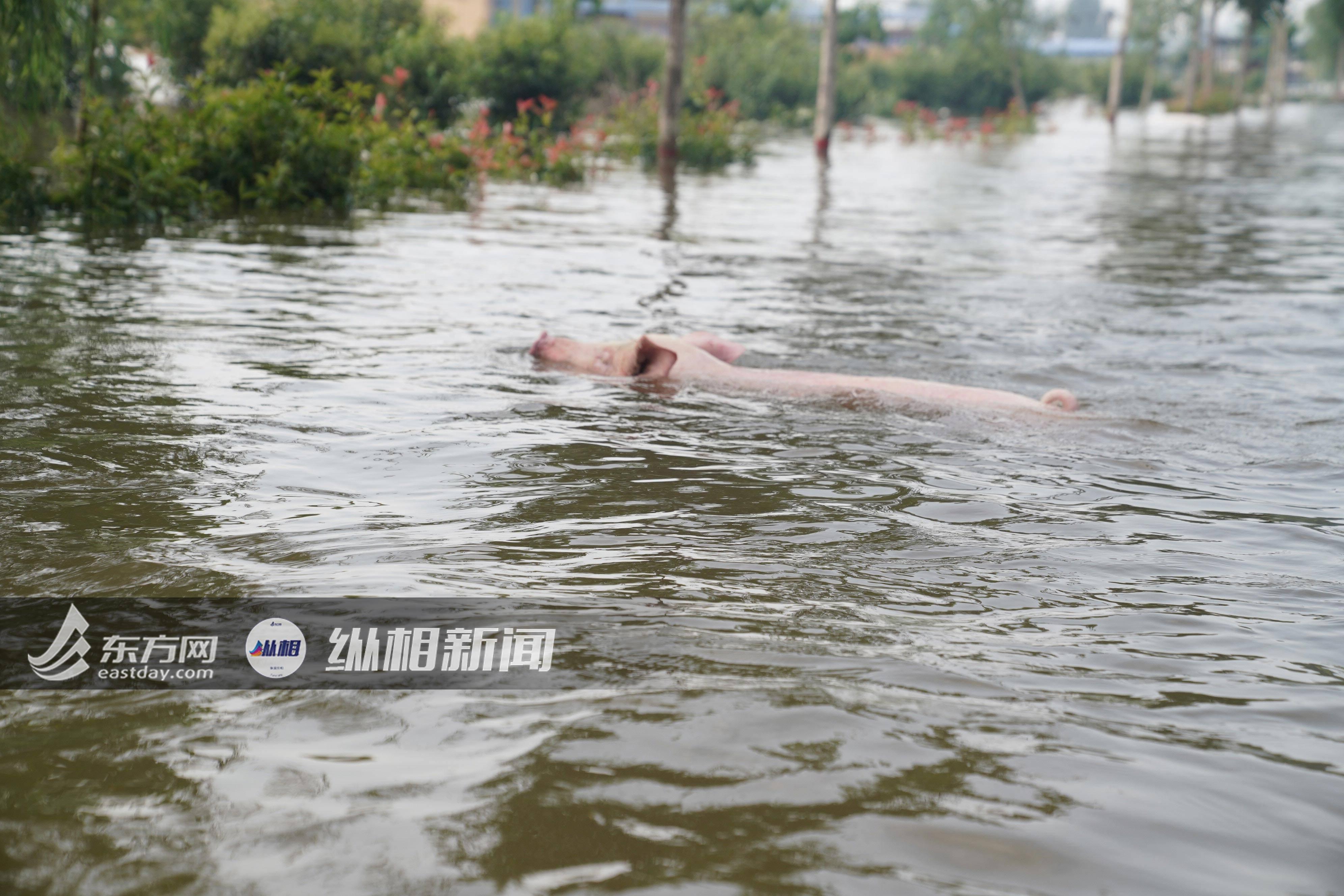 记者实探即将泄洪的淇县:救援人员苦苦哀求,村民为看家不肯转移