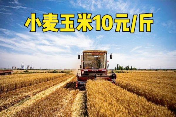 农药化肥价格上涨,粮价涨到多少合适?小麦和玉米10元一斤?