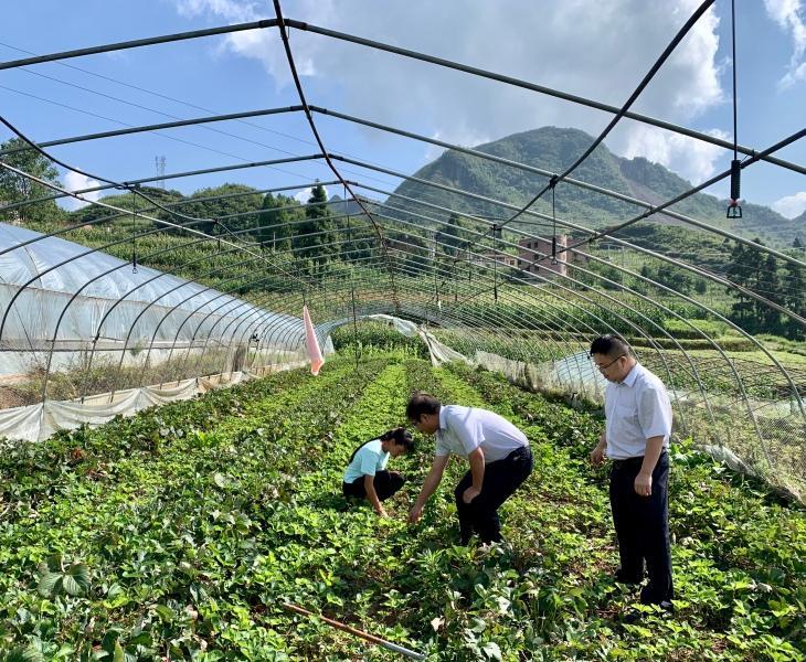"""毕节农商银行:助力产业发展 """"贷""""来""""莓""""好生活"""""""