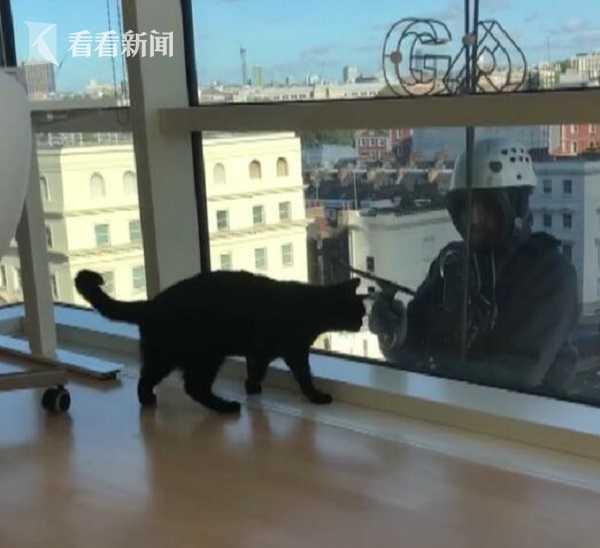 高海拔人猫情!洗窗工用工具逗猫 还隔窗求亲亲