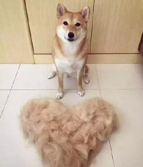怎么能做到养了狗,家里却没有狗毛?5个办法建议收藏!