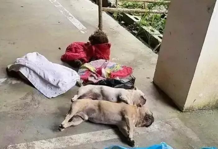 揪心!贵州一小区8条宠物狗中毒身亡,狗主人崩溃大哭,现场曝光