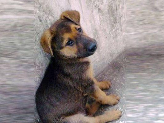 收养了8年的老黄狗咬伤一家三口,被活活打死,五秒后事情发生了