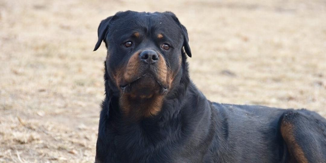 """这7种""""黑色""""狗狗霸气十足,真的太帅了!不妨认识一下"""